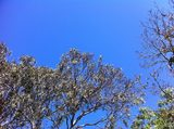 blue sky in melbourne 2014 Nov.jpg